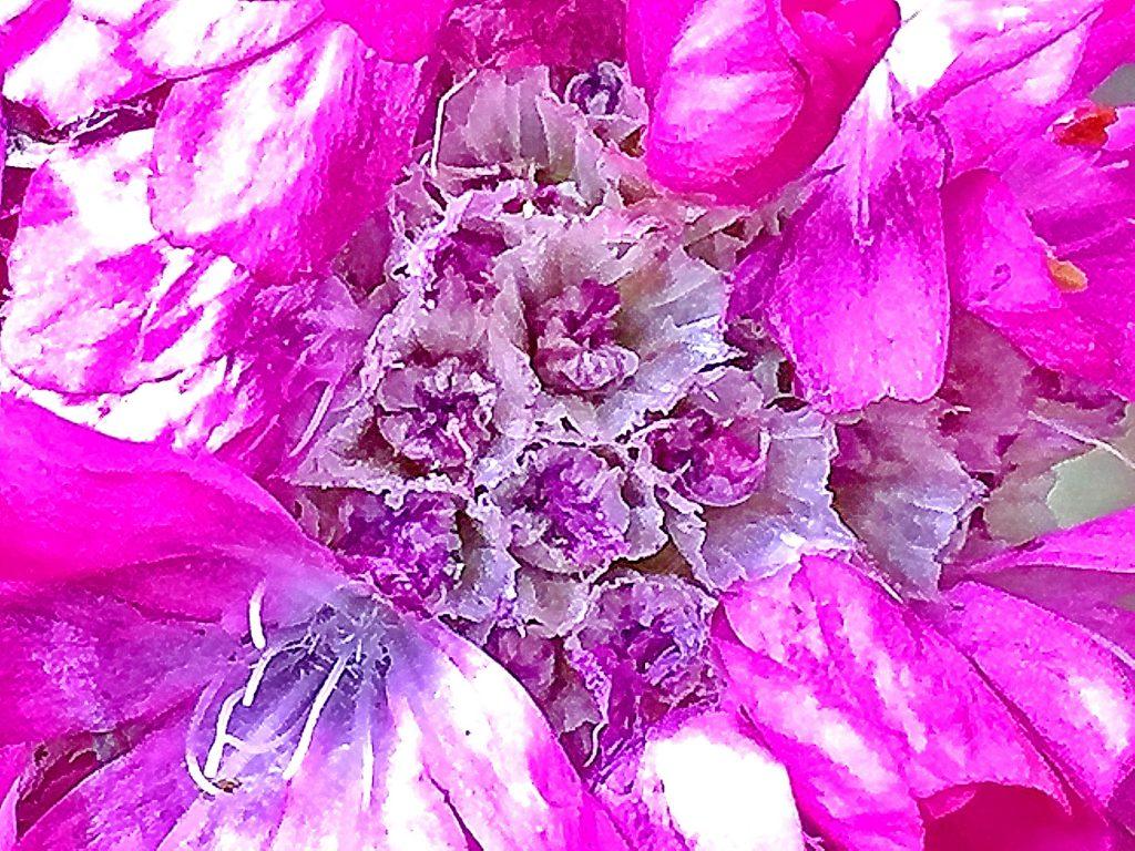 硬そうな葉っぱは柔らかく、柔らかそうな花はカサカサしているアルメリア
